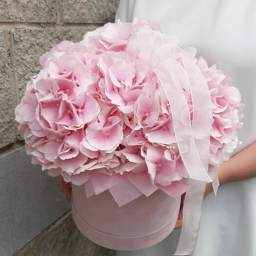 розовая гортензия в шляпной коробке