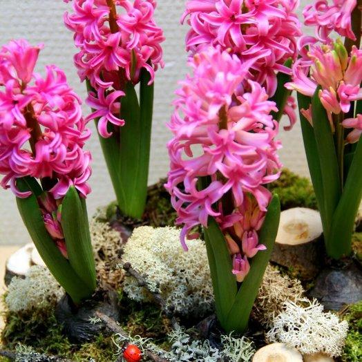 Весна на окошке: букеты цветов на заказ Flowwow