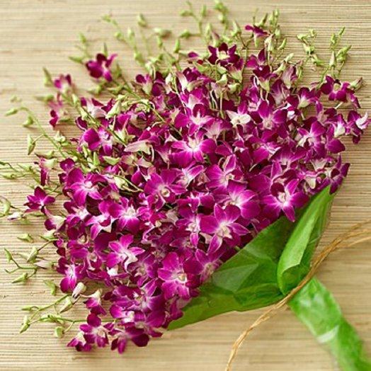 Шикарная орхидея