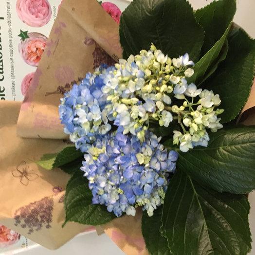 Букет из гортензии))): букеты цветов на заказ Flowwow