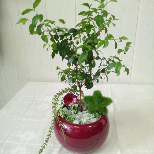 Минисад: букеты цветов на заказ Flowwow