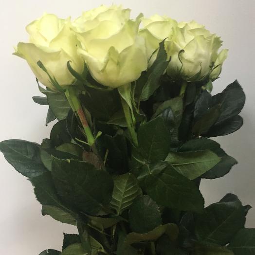 Роза Мондиаль 17 шт: букеты цветов на заказ Flowwow