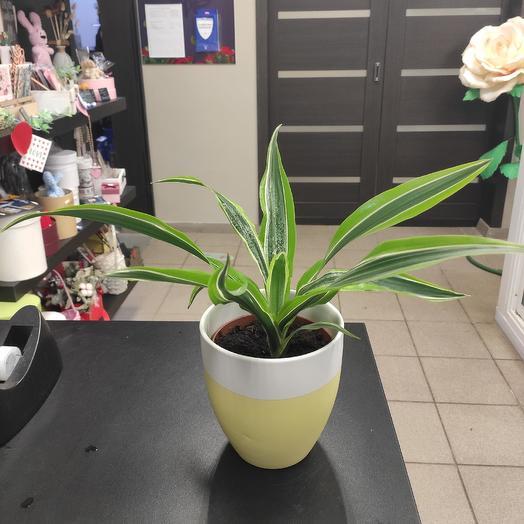 Растение в кашпо: букеты цветов на заказ Flowwow