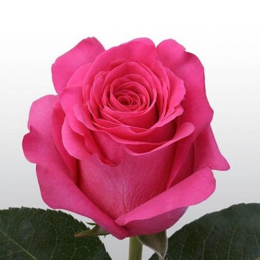 Роза Эквадор Топаз