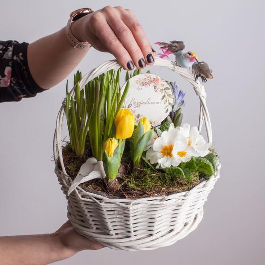 Корзиночка с первоцветами