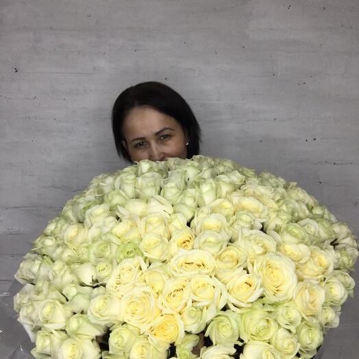Розы белые 151 штука 60  см