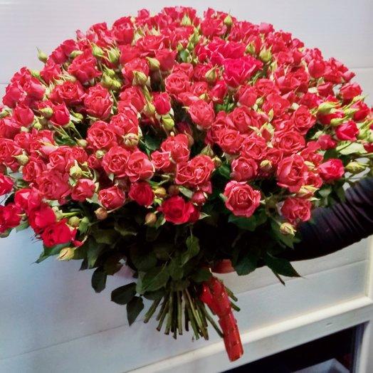 49 Красная кустовая роза