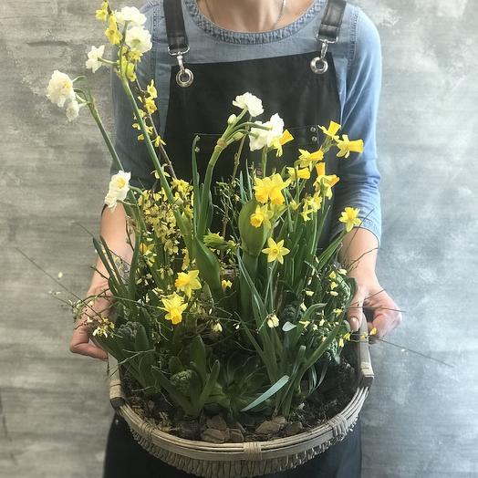Нежная весенняя композиция из первоцветов: букеты цветов на заказ Flowwow