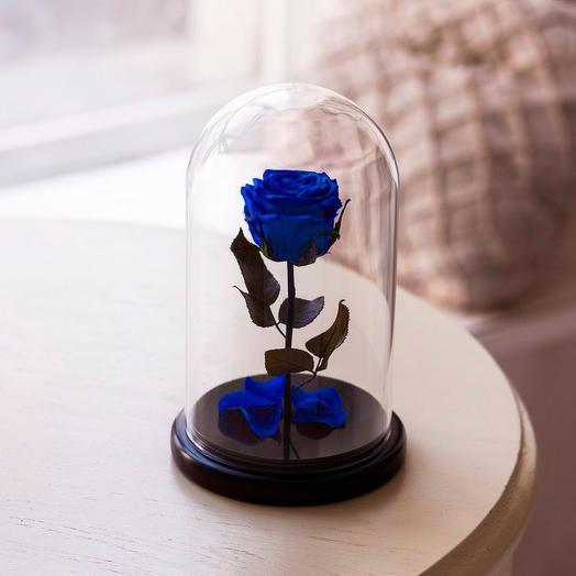 Роза в колбе «Premium» синяя