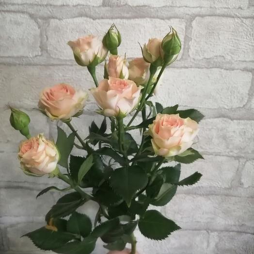 Кремовая кустовая роза трейси 1ветка 50см