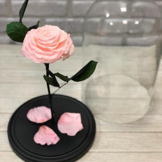 Кремовая Роза KING: букеты цветов на заказ Flowwow