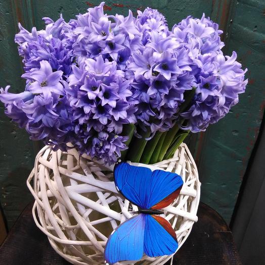 Гиацинт цвета неба: букеты цветов на заказ Flowwow