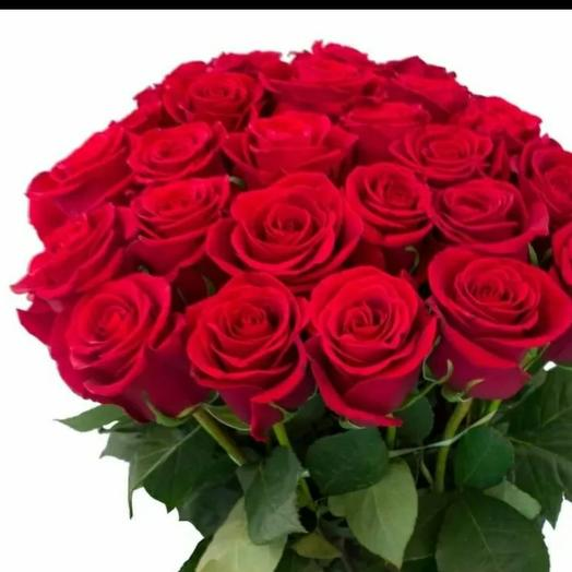 Роза голландия
