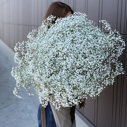 25 White Gypsophilas