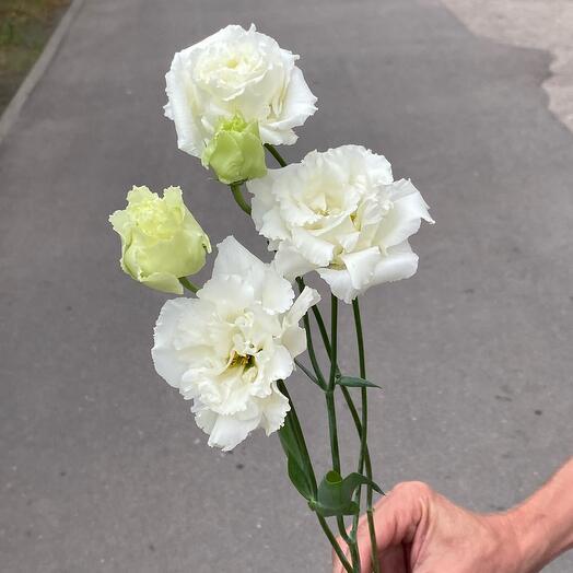 Ажурные белые лизиантусы «Алиса»