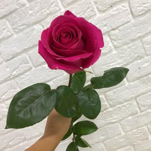 Роза Pink Floyd 70 см