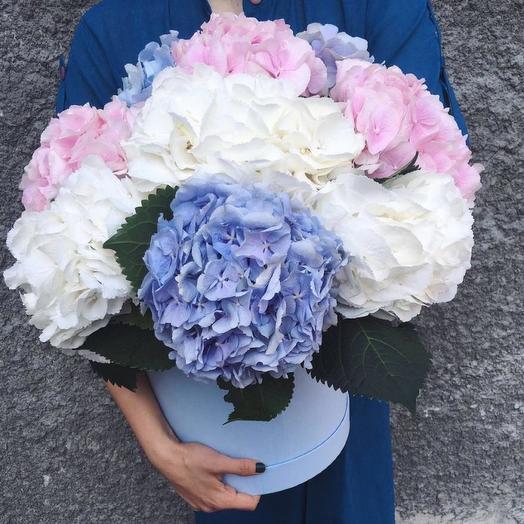 9 гортензий в шляпной коробке: букеты цветов на заказ Flowwow