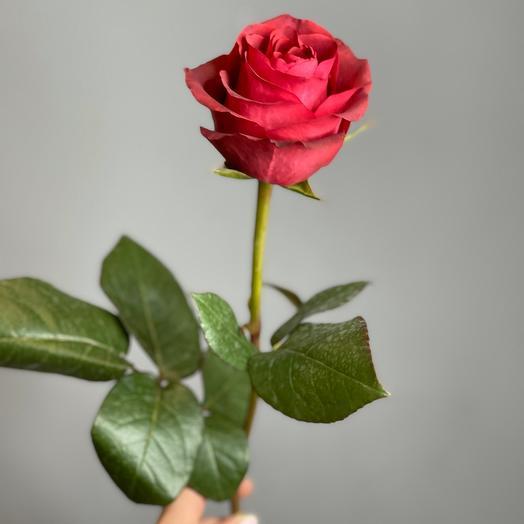 Роза эксплорер эквадор