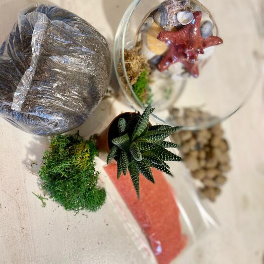 A set for creating a florarium with a plant included