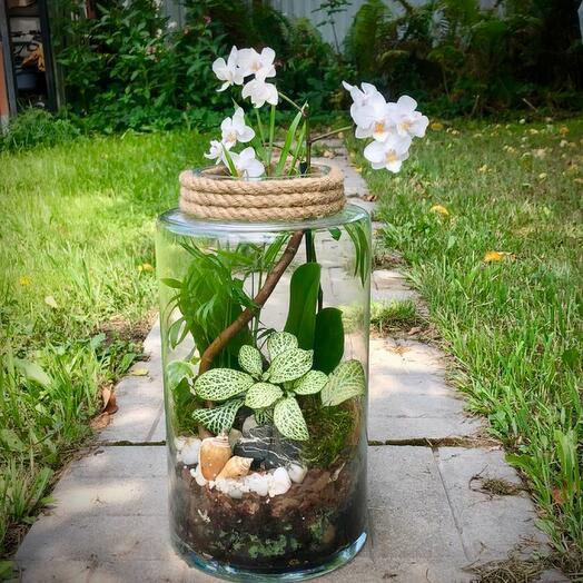 Florarium with orchids