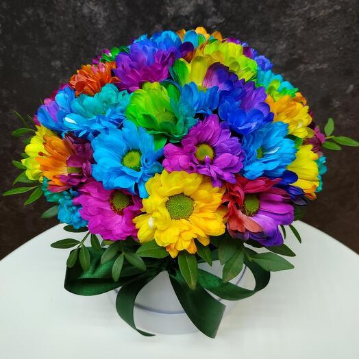 Chrysanthemus Rainbow Box