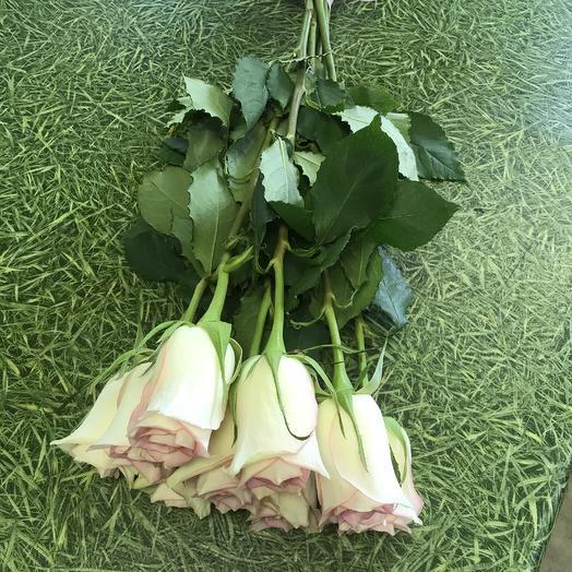Букет из 9 нежно бело-розовых роз под ленту: букеты цветов на заказ Flowwow