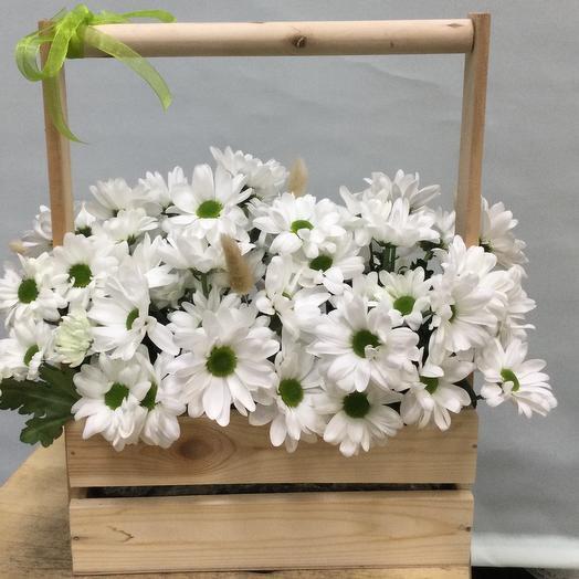 Ящик с хризантемой