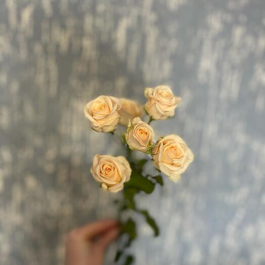 Роза Яна 60 см