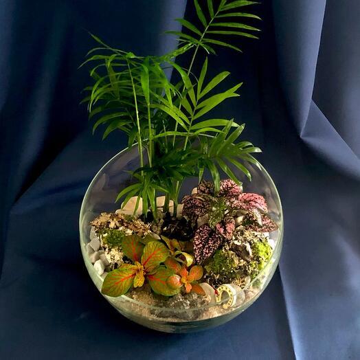 Флорариум тропический