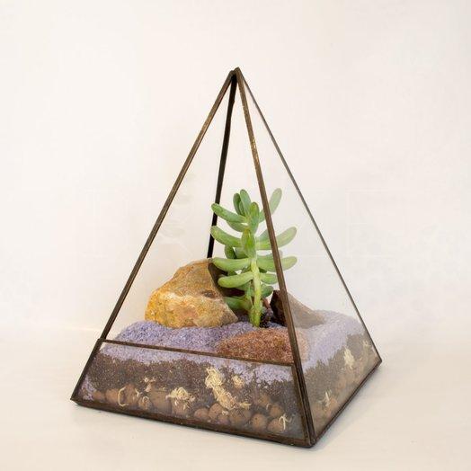 Флорариум в пирамиде с суккулентом