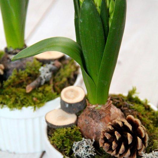 Весна в керамическом кашпо