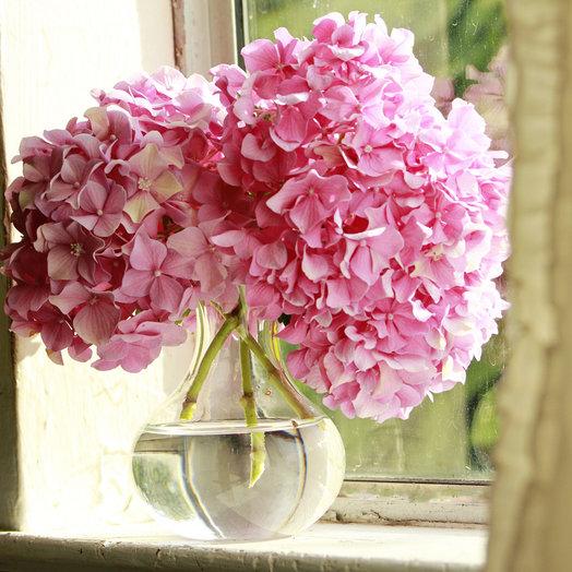 3 гортензии: букеты цветов на заказ Flowwow