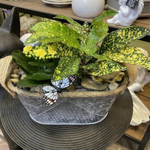 Растения в кашпо: букеты цветов на заказ Flowwow
