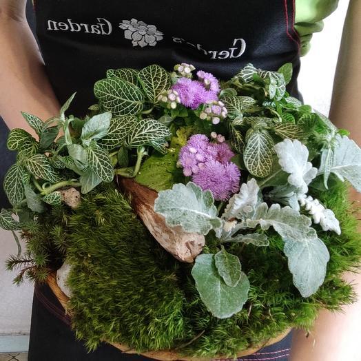 Композиция ALPS: букеты цветов на заказ Flowwow