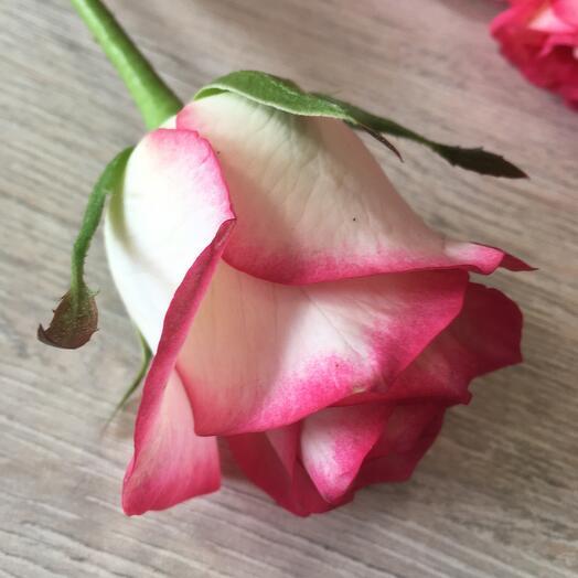 Роза Джумилия 40си