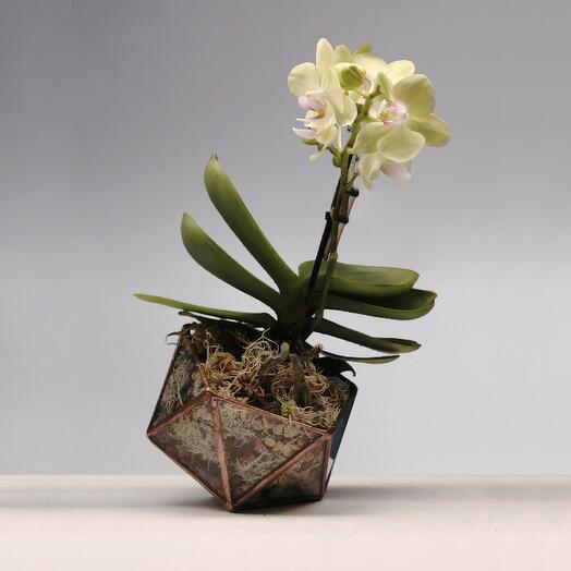 Флорариум Ferndale с орхидеей
