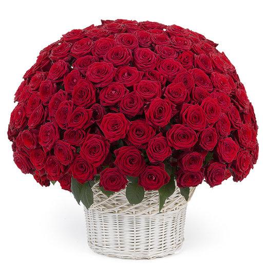 Корзина из 151 красной розы: букеты цветов на заказ Flowwow