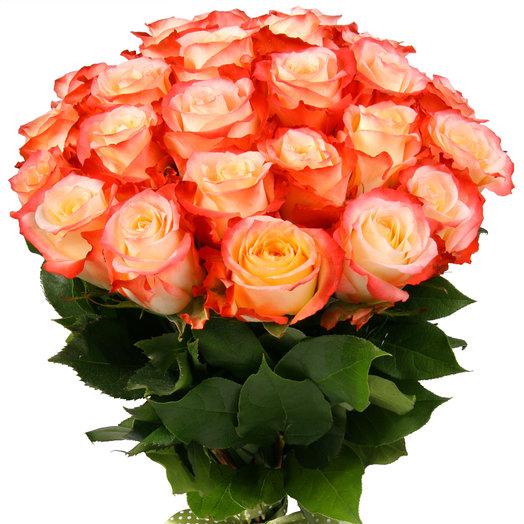 Букет из 25 бело-оранжевых эквадорских роз