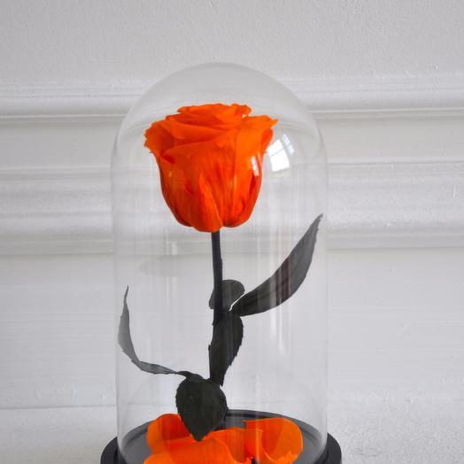 Роза в колбе мини Заводной Апельсин: букеты цветов на заказ Flowwow