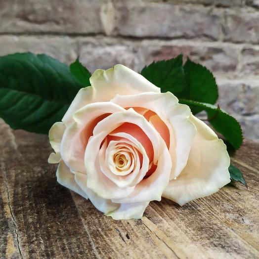 Роза Крем