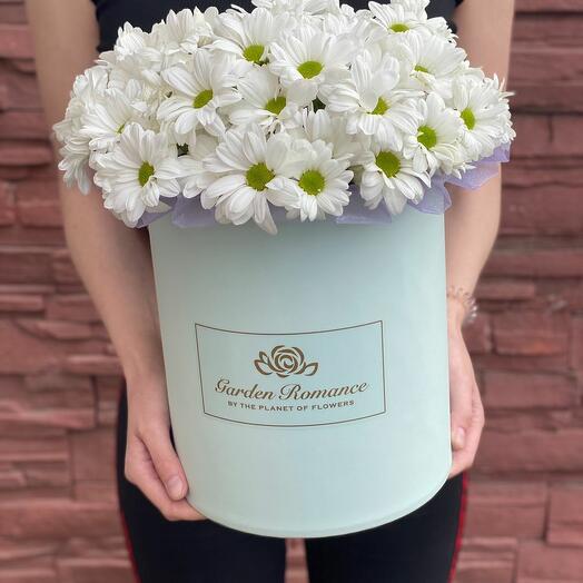 Bush daisies in a box