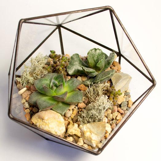 Флорариум с суккулентами в мини икосаэдре: букеты цветов на заказ Flowwow