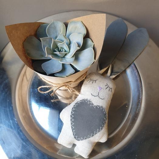 Эйхеверия с игрушкой: букеты цветов на заказ Flowwow