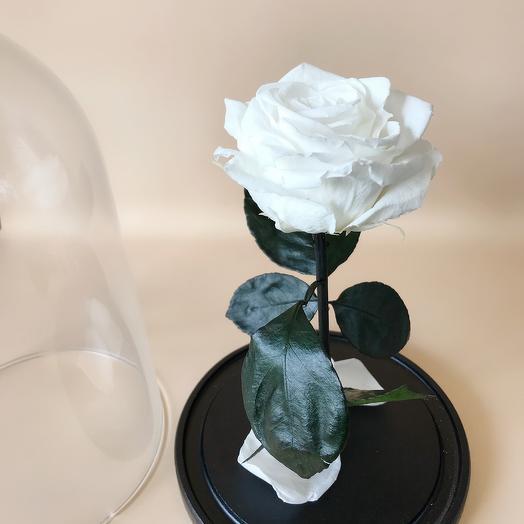 Роза в колбе стандарт белая