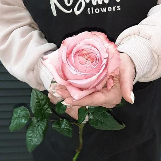 Роза пионовидная 60 см