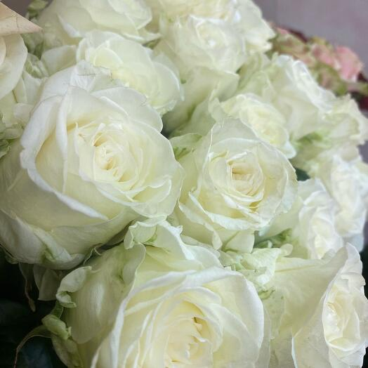Розы аиша