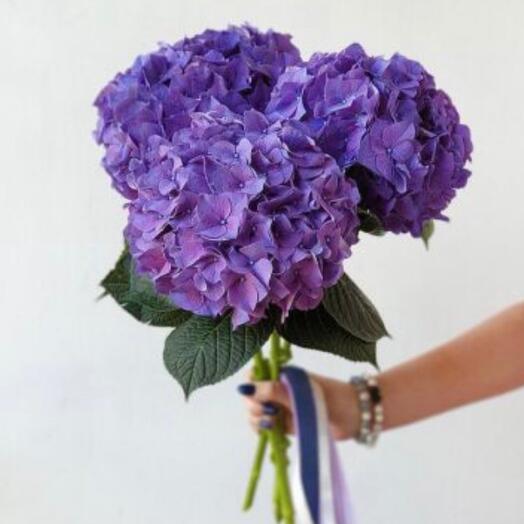 Гортензия Purple