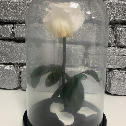 роза стандарт белая