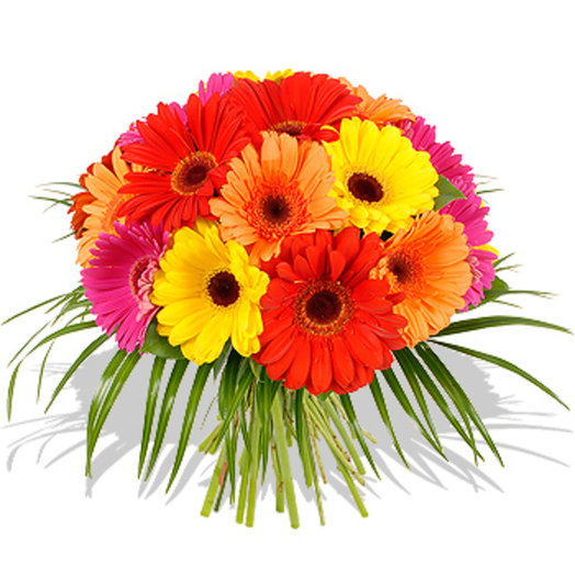 Герберный попугай: букеты цветов на заказ Flowwow