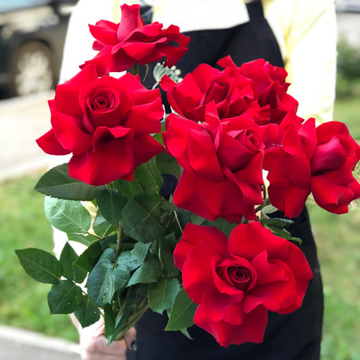 11 красных роз СофиЛорен: букеты цветов на заказ Flowwow